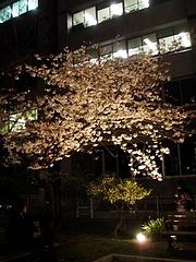 200904自炊部桜