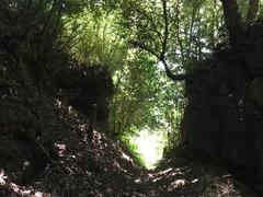 興国寺城 (10)