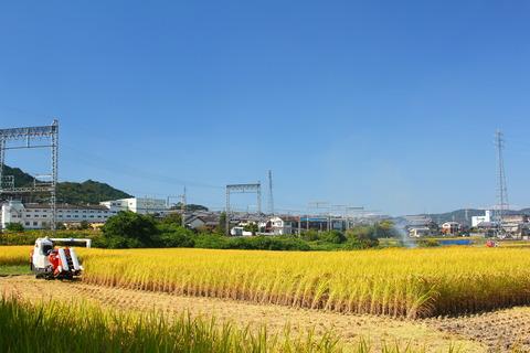 稲刈り 131