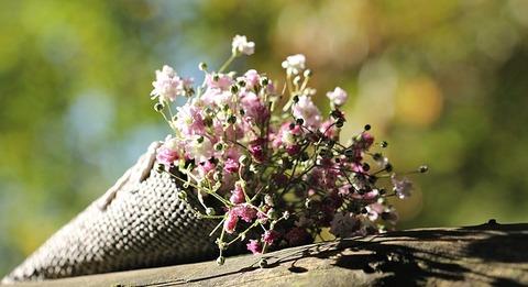 bag-gypsofilia-seeds-1716655_640