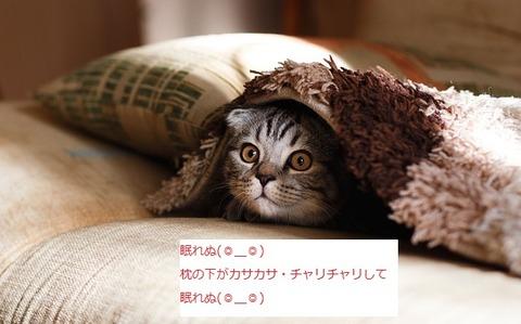 pillow-2566613_640ne