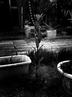 月桂樹2011