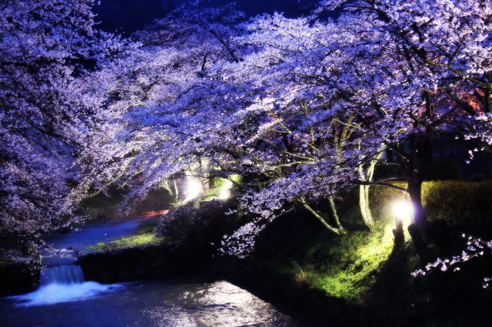 花見 京都