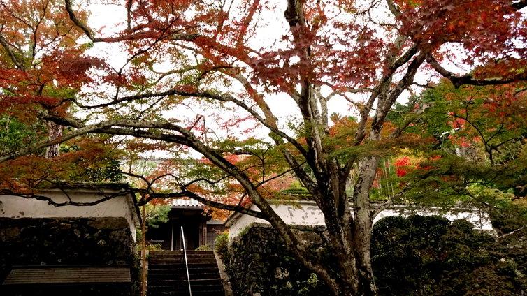 神蔵寺 楓