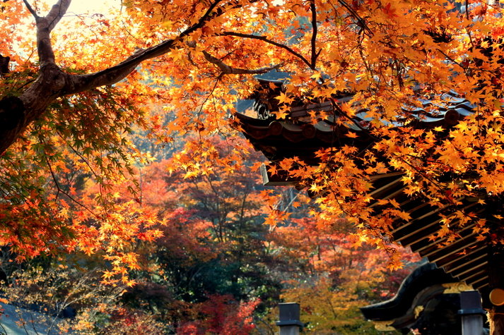鍬山神社 紅葉 2013
