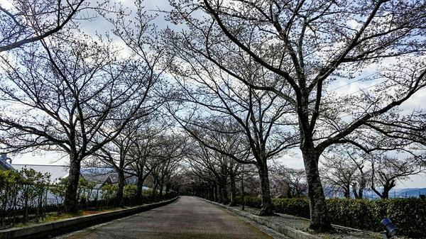 和らぎの道 桜 2019