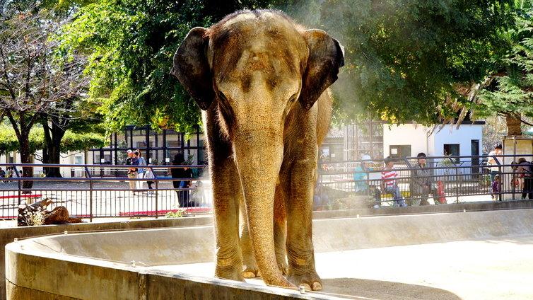 姫路市立動物園 ゾウ