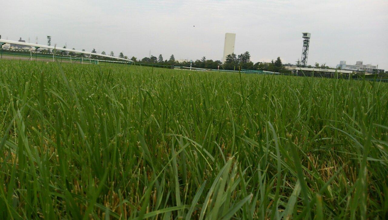 阪神競馬場 芝コース開放