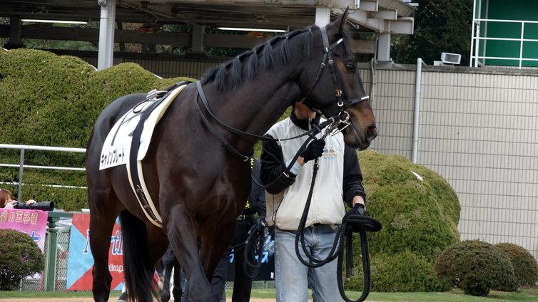 キャノンプレート 馬