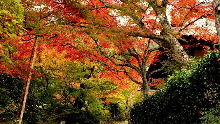 神蔵寺 京都