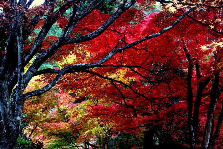 神蔵寺 紅葉