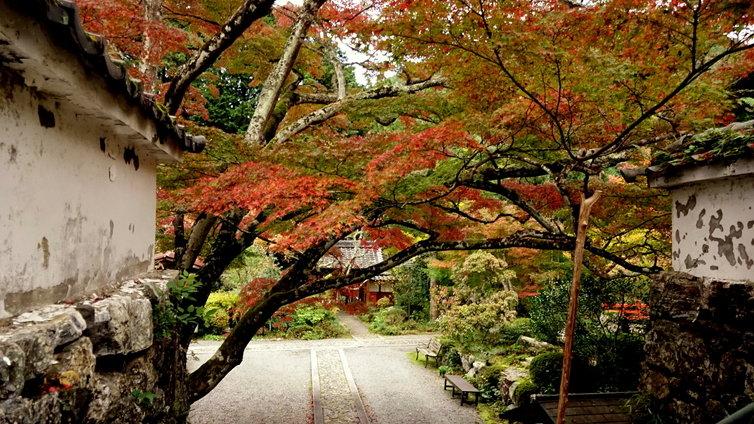 京都 紅葉 2014