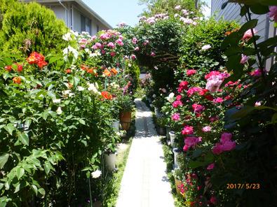 入口から見たバラ庭