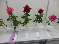 1本花入賞バラ