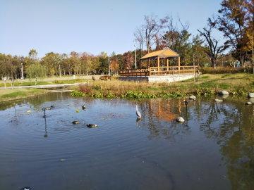 360x270池の鳥725