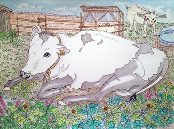 500x369植村牧場の牛2181