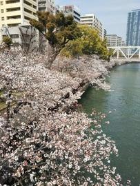 270x360桜川104