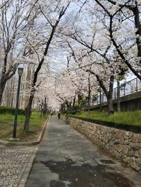 270x360桜アーチ109