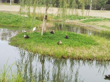 360x270芝生の鳥728