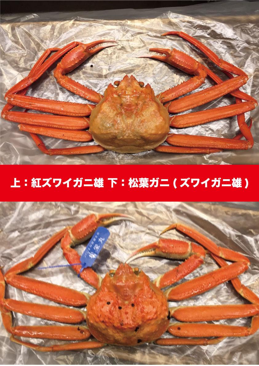 【紅ズワイガニとズワイガニの見分け方 その②】(画像あり ...