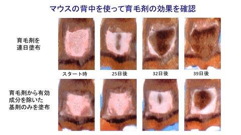 育毛剤実験