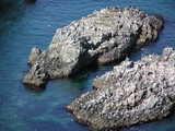 海鳥コロニー