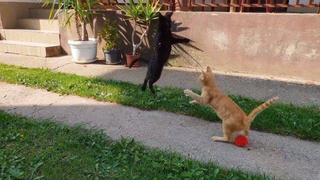 あっちにもこっちにもジャンプしてホイ!元気いっぱいピョンピョン跳びまくる子猫たち