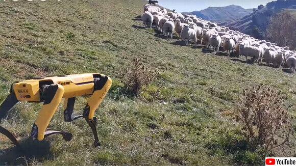 仕事を選ばないあの犬型ロボット「スポット」が、今度は牧羊犬に!?農場勤務に任命される