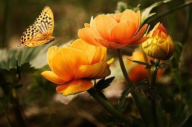 世界中で昆虫が激減している。好む好まないにかかわらず真剣に考えなければならない時が来ている