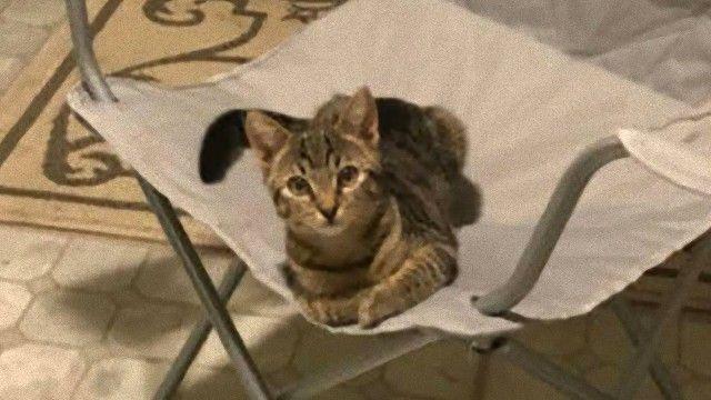 お気に入りの椅子にちょこんと座っていた侵入者は猫だった。今日もNNNミッションコンプリート