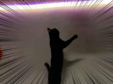 2匹のネコが「追いかけっこ」をしていた。まてまて、ぴょーん♪ → 猫、パルクール!