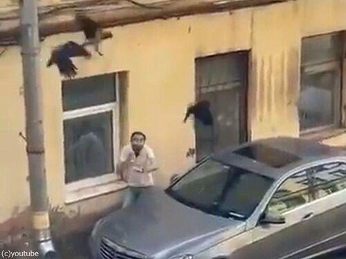 「車の上に飛べないカラスがいたので捕まえてどかそうとしたら…」→他のカラスたちが助けようと襲ってくる