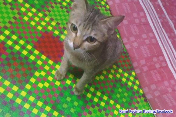 飼い主のイヤホンを破壊した猫。その代償として生きのいい細長いものを進呈(※ヘビ出演中)