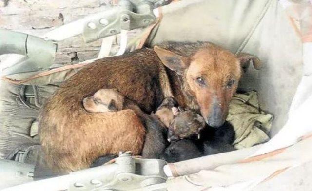 犬の母性は天井しらず。凍える夜に野良犬が抱いていたのは、自身の子犬と人間の赤ちゃんだった