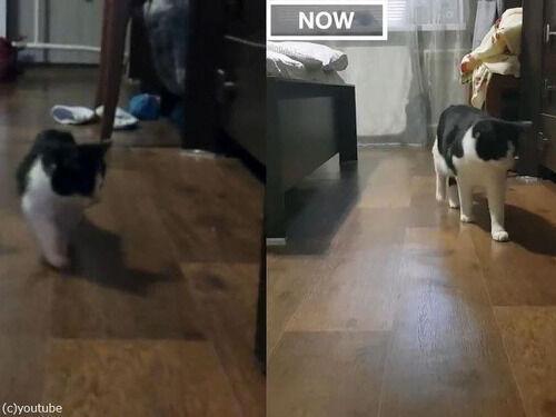 3か月の子猫が3歳に成長したとき、映像を並べてみると…違いは?(動画)
