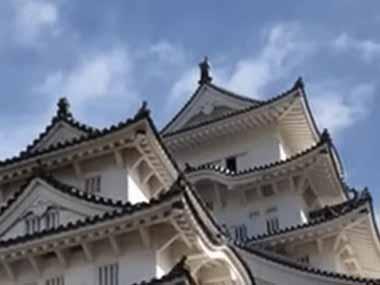 【ネコ】 旅行で姫路城に行った。見事な石垣だ → きっと猫もそう思ってる。