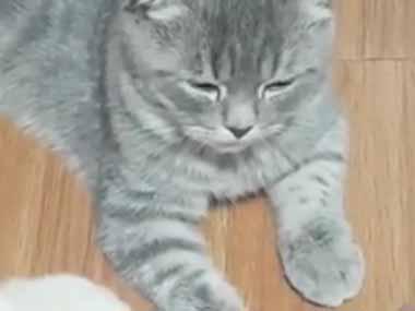 ネコを指で撫でてみた。違う、こっちでしょ! → 寝転ぶ犬はこうします…