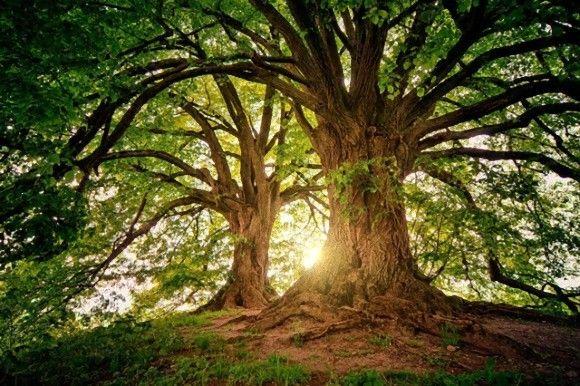 1兆2000億本の木を植えることで人間が排出する二酸化炭素を10年分吸収してくれる(スイス研究)