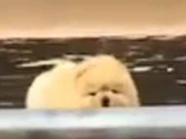 モフモフな子犬が出られなくなった。ほら、がんばって! でっかいモフモフが励ました → 結果…