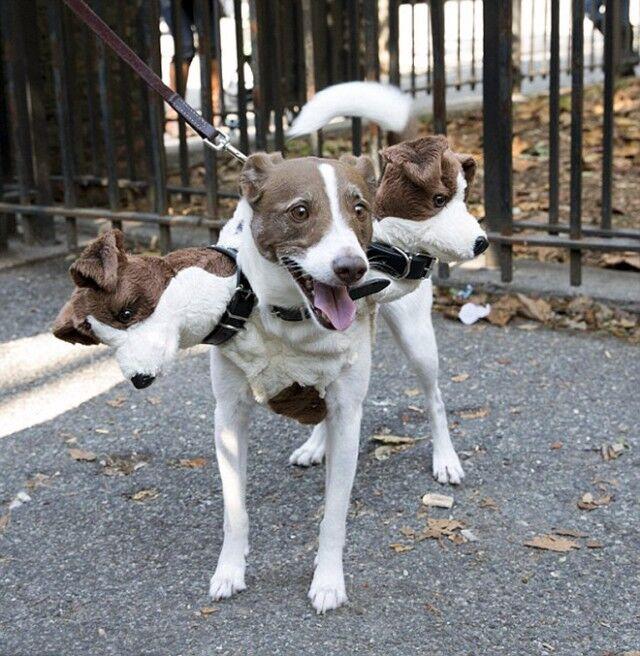 そして犬はケルベロスとなる。ハロウィンで世界各地に出没した地獄の番犬たち