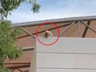 ネコが高い塀の上で鳴いていた。助けようにも道具がない。服を広げて下で受け止めようぜ! → 結果…