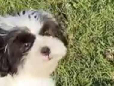 イヌは「ボール遊び」が大好きだ! そら、取ってこい♪ → うちの犬だとこうなります…