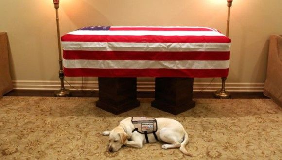 ジョージ・ブッシュ元大統領の棺の前に寄り添うように横たわる介助犬の姿が全米の涙を誘う