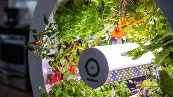 家の中で簡単に90種類の野菜や果物を育てることができるプランターが販売決定