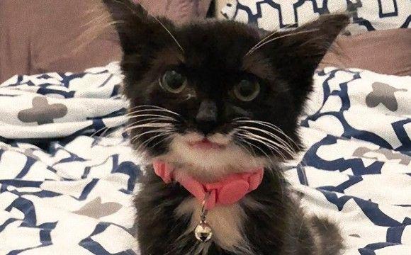 口角がきゅんっと上がって極上のキャットスマイル。笑顔が魅力の保護猫「チューリップ」の物語(カナダ)