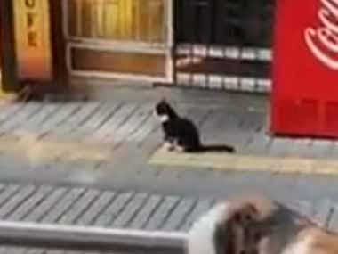 【ネコ】 店を出ると1匹の猫がいた。ぐで~ん♪ → 猫はフリーダムです…