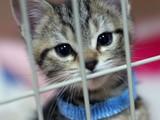 カワイイペット子猫の画像
