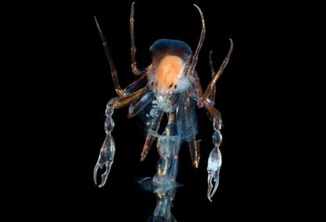 不思議な深海生物、深海魚001写真