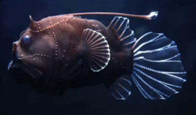 深海魚色々スライドショー1
