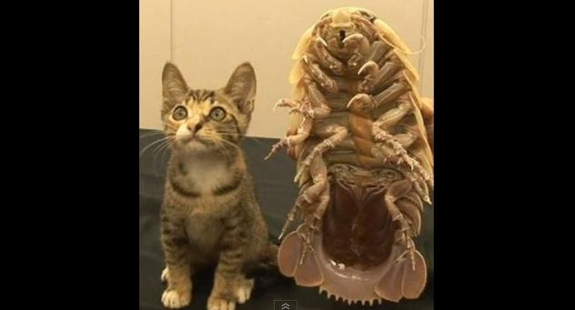 巨大昆虫001